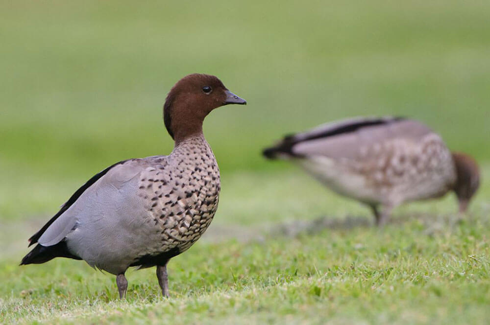 Country-Place-bird-watcher-paradise.jpg