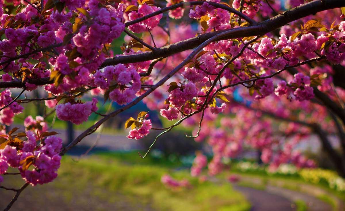 spring-time-dandenongs.jpg